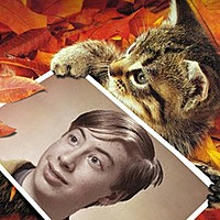 Foto efecto - Cute Kitten In The Autumn Leaves