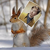 Foto efecto - Squirrel on the demonstration in a snowy forest