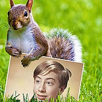 Effect - Squirrel on the green grass