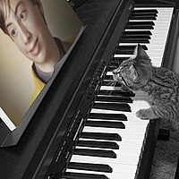 Photo effect - Piano for a Kitten