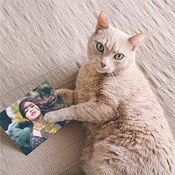 Photo effect - All you need is cat