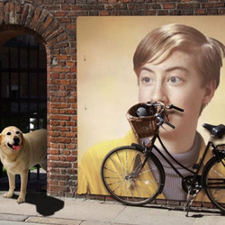 Photo effect - Labrador guards the bike