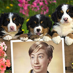 Photo effect - Saint Bernard puppies