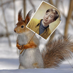 Photo effect - Squirrel on the demonstration in a snowy forest