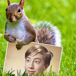 Photo effect - Squirrel on the green grass