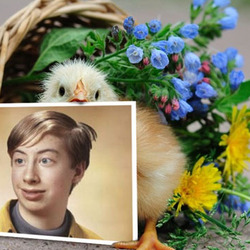 Photo effect - Tiny chick with a basket of flowers