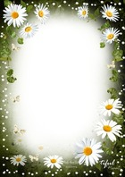 Photo frame - Tenderness of White Daisies