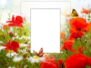 Molduras para fotos - Frame With Poppies