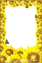 Molduras para fotos - Freshness of Sunflowers