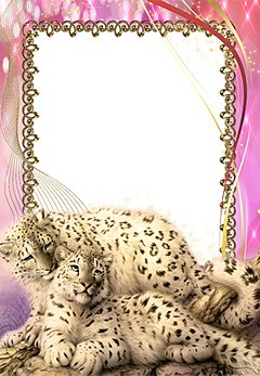 Animals. Photo frame with snow leopards