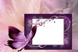 Mini Photo frame - Butterflies flapping