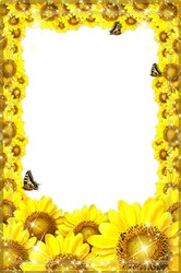 Mini Photo frame - Freshness of sunflowers