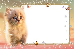 Mini Photo frame - Cute fluffy kitten