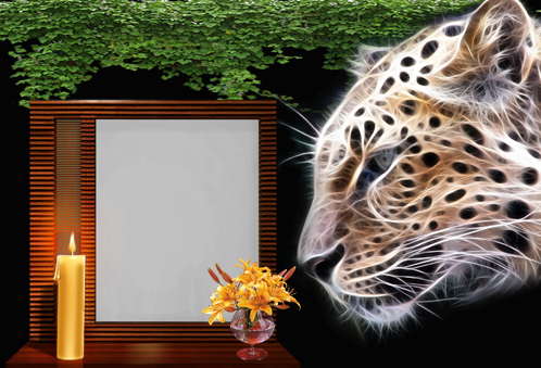 Photo frames. Night tiger
