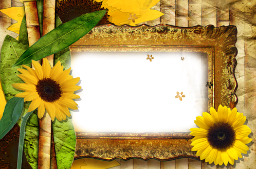 Photo frame - Beauty of sunflowers