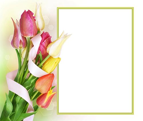Photo frame - First delicate Spring tulips