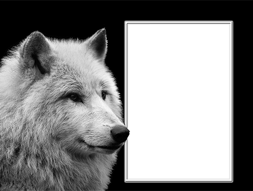Photo frame - Frame with a white wolf