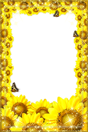 Photo frame - Freshness of sunflowers