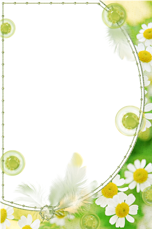 Photo frame - Green camomiles