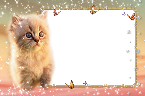 Photo frame - Cute fluffy kitten