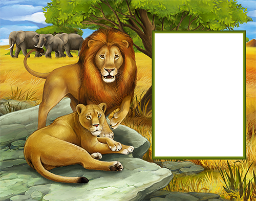 Cadre photo - Lions in wild nature