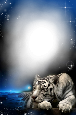Photo frame - Tiger in the night