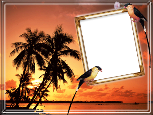 Photo frame - Tropical birds